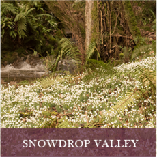 Snowdrop Valley surrounded by woodland